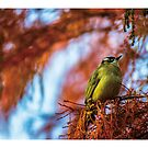 Lovely bird by PHILIP H.P. WONG