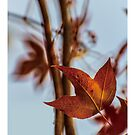 Good red leaf by PHILIP H.P. WONG