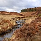 Meandering through the Meldons by Christine Smith