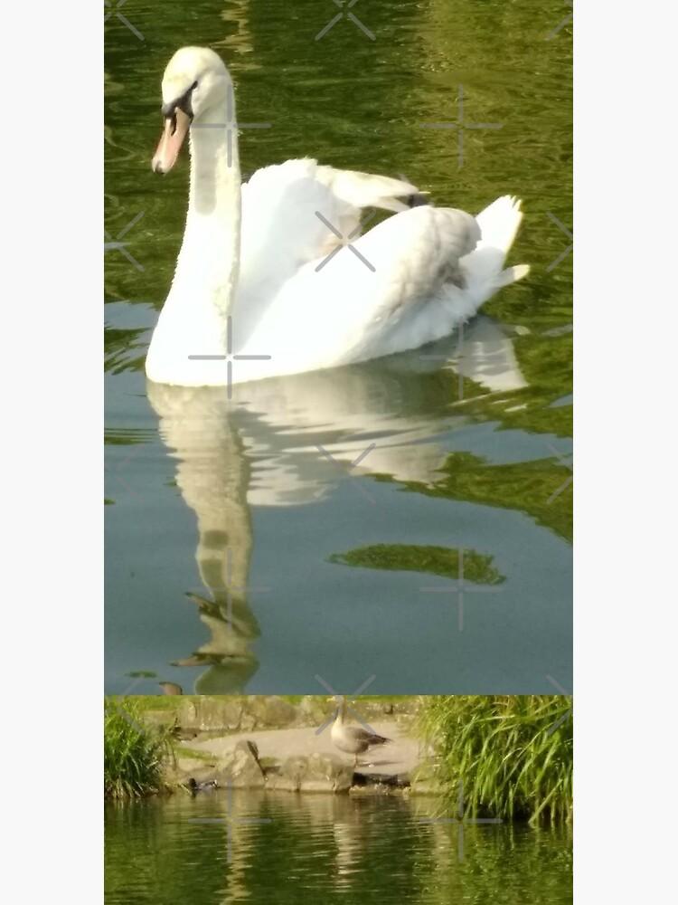 M.I. #69 |☼| Swan - Shot 27 (Pearson Park) by Naean