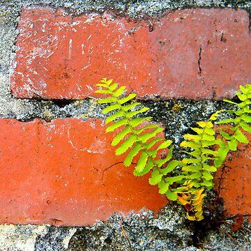 Brick Wall by ArtDragon