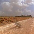 Desert Road by almulcahy