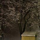 Frosty Foggy Night by Lois  Bryan