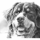 Bernese mountain dog drawing by Mike Theuer