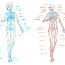 Human Skeletal and Muscular Anatomy by Livali Wyle