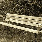 Bench In The Woods by Snapshotsandra
