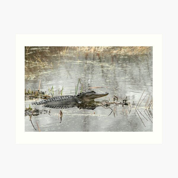 Gator Day Art Print