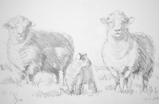 Sheep And Lamb Drawing Photographic Prints By Mikejory Redbubble