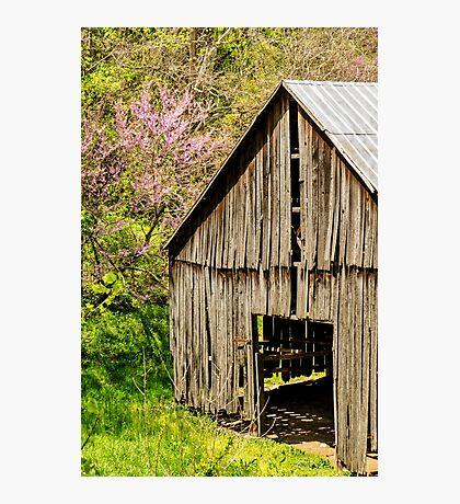 Springtime In Kentucky Photographic Print