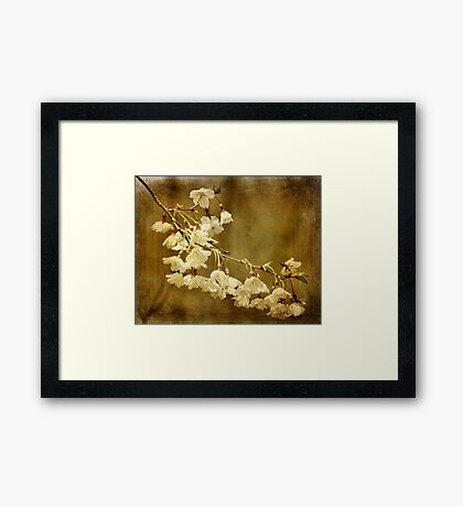Almost Spring Blossoms Framed Print