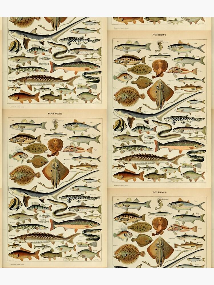Fish Chart by bluespecsstudio