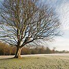Winter morning light by StephenRB
