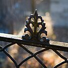 Fenced bokeh by Irene2005