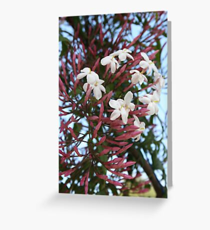 Pink Buds and Jasmine Blossom Close Up Greeting Card