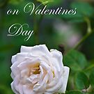White Rose Valentine by PhotoJoJo