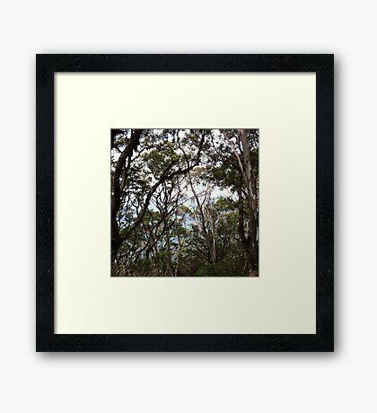 Gone Bush Framed Print