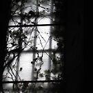 A church window overgrown by Anna Goodchild