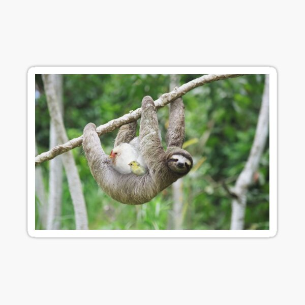 Sloth and mother hen Sticker