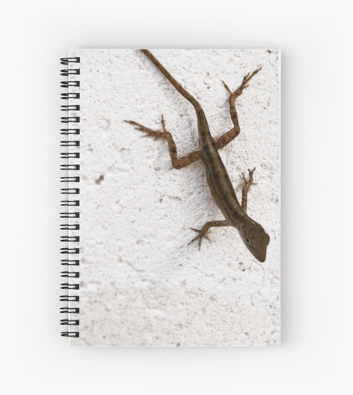 Small Lizard  by Elijah Robert
