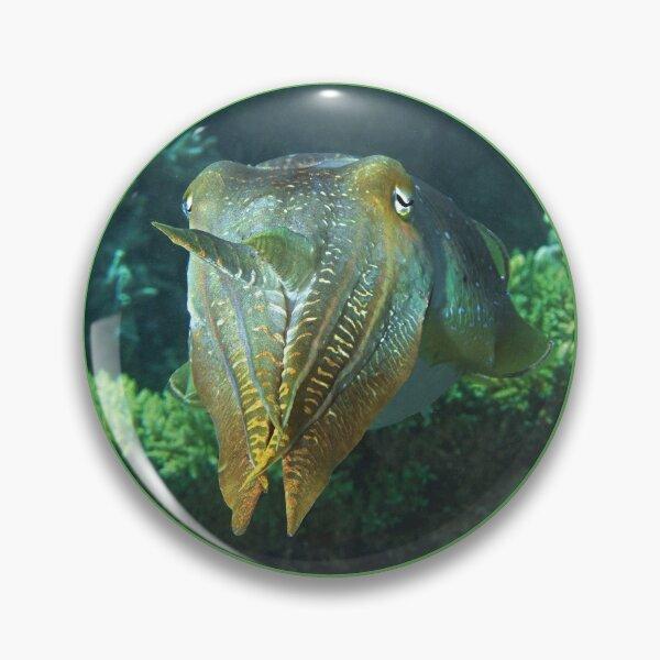 Sepia | Farbenspiel zwischen Korallen |  Button
