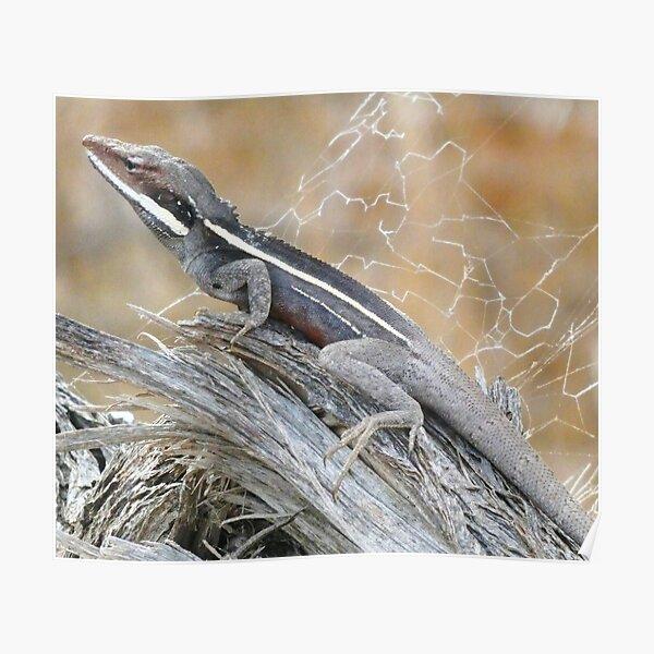 Gilbert's Dragon On a Log Poster