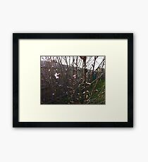 Flowering Tree Framed Print