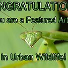 Urban Wildlife Banner by William Brennan