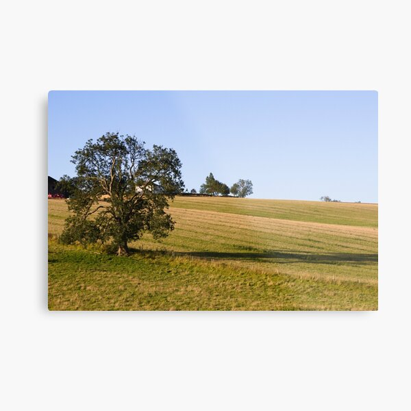 A tree in a field near Wold Newton in the Lincolnshire Wolds. Metal Print