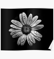 Backyard Flowers In Black And White 16 After The Storm Poster