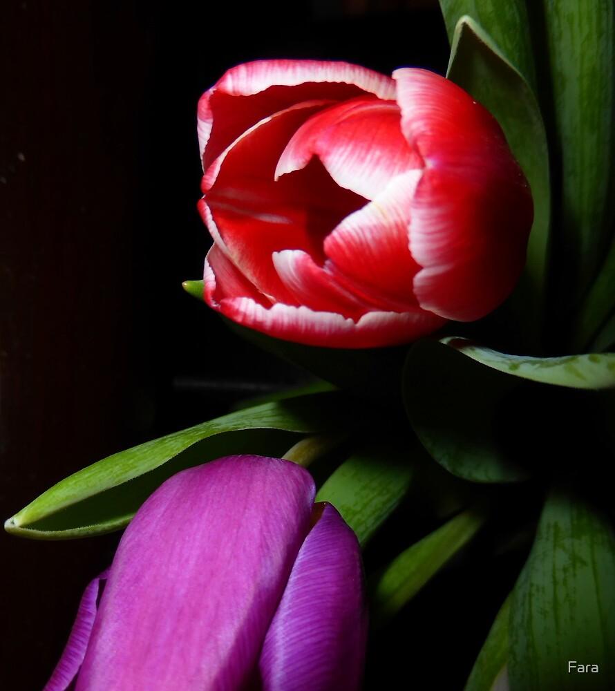 The Drunken Tulip by Fara