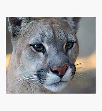 12014 puma Photographic Print