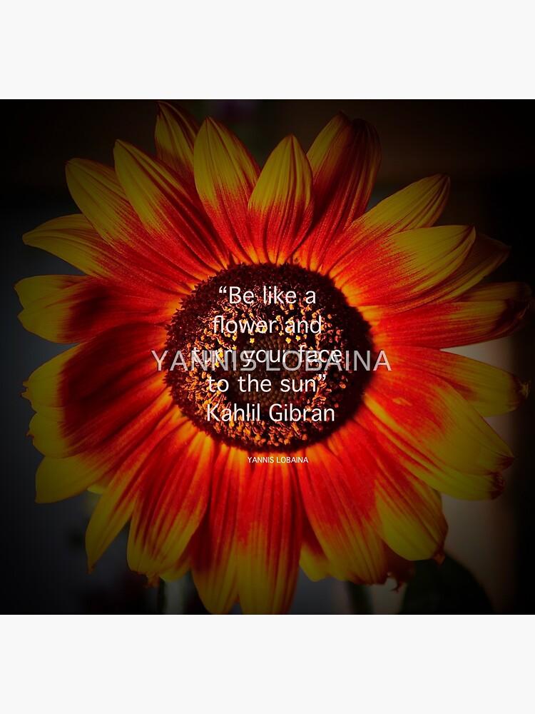 Be a sunflower By Yannis Lobaina by lobaina1979