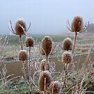Frosty teasel by KatDoodling