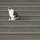 The Cat Sat... by pix-elation