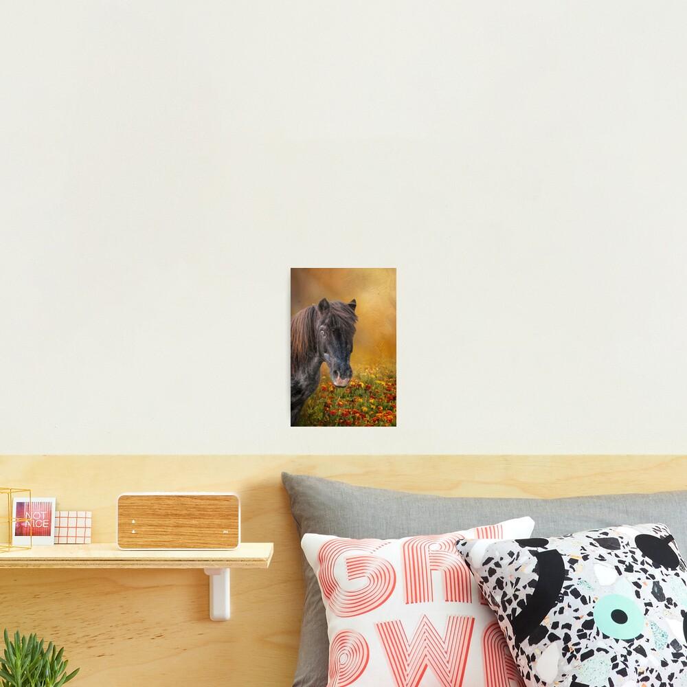 Shetland Pony and Marigolds Photographic Print