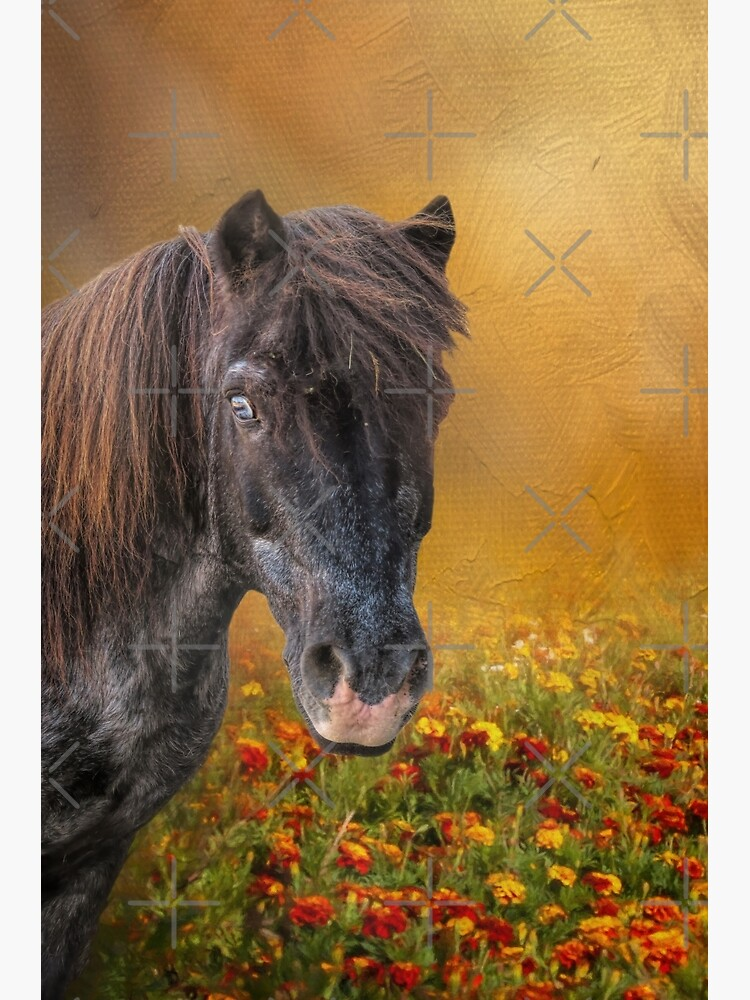Shetland Pony and Marigolds by fineart2017