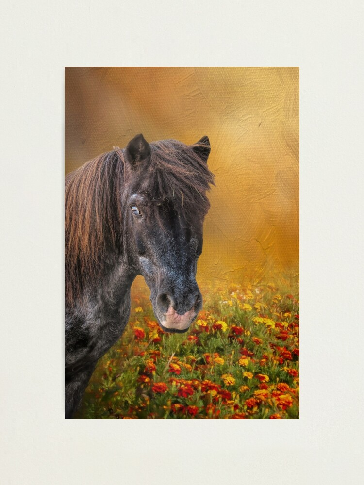 Alternate view of Shetland Pony and Marigolds Photographic Print