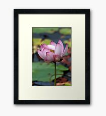Lotus Ready To open Framed Print