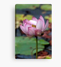 Lotus Ready To open Canvas Print