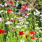 Flower garden by Jason Smalley