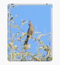 Female Phainopepla Eyeing the Morning from Her Tree iPad Case/Skin