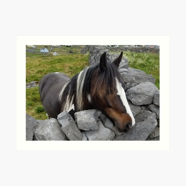 Horse on Inisheer Island, Ireland Art Print