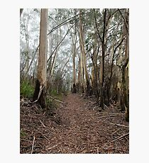 Mountain Ash Trees 1 Photographic Print