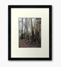 Mountain Ash Trees 2 Framed Print