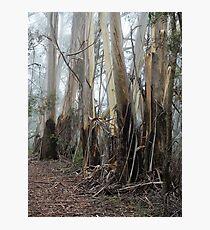Mountain Ash Trees 2 Photographic Print