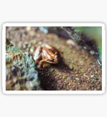 Macro of a brown frog in the water Sticker