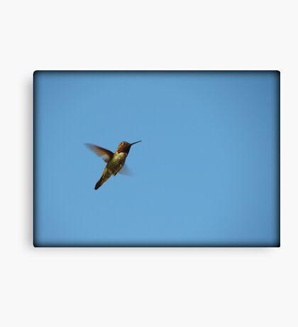 Simply Stunning~ Anna's Hummingbird (Male) Canvas Print