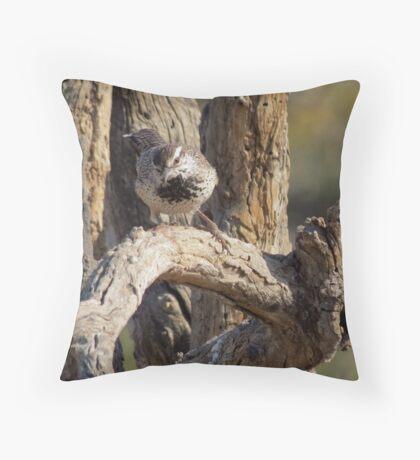 Cactus Wren~  Curiosity Catch Throw Pillow