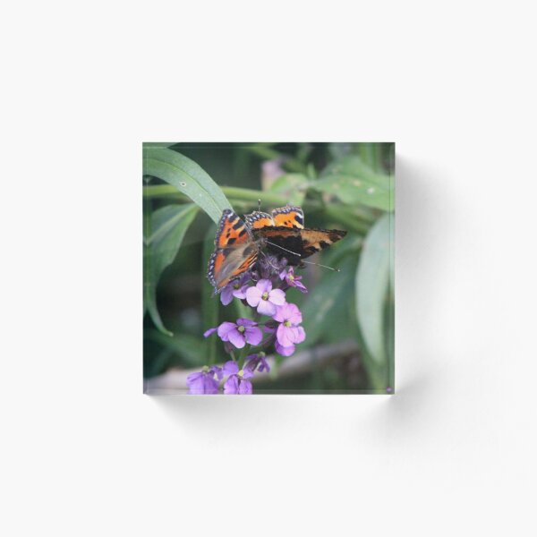 Two Painted Lady Butterflies Acrylic Block