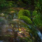 Mountain Stream by Dobromir Dobrinov